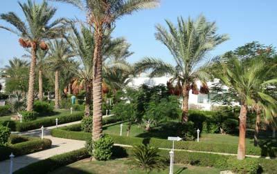 Фото отеля Dessole Royal Rojana Resort 5* (Дессоль Роял Роджана Резорт 5*) – Шарм-Эль-Шейх - Египет