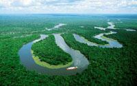 Фото - Джунгли Амазонии